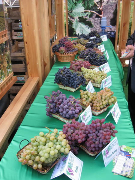 День вина в Молдове – национальный праздник — фото 10