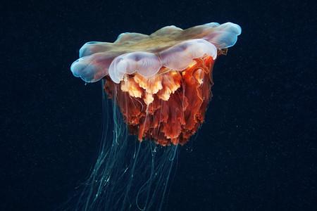 Подводные фотоэксперименты Александра Семенова — фото 2
