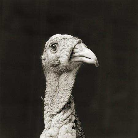 Фотографии пожилых животных от Исы Лешко — фото 11
