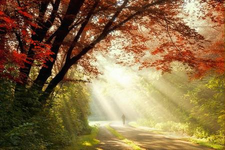 Осень – многоцветная царица… Волшебные фотопейзажи Ларса Ван де Гур — фото 20