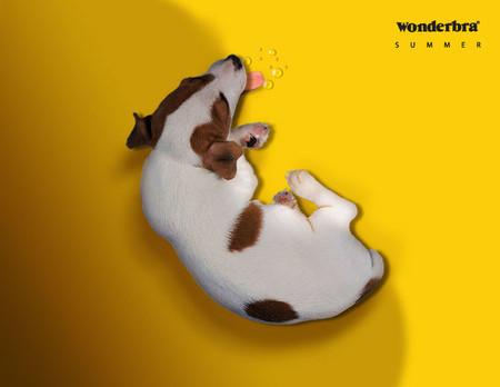 WonderBra – хитрые лифчики в хитрой рекламе — фото 15