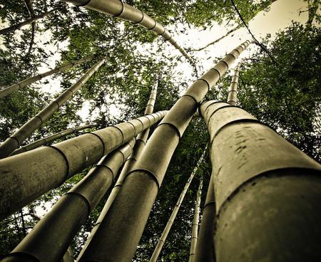 Япония, Киото, бамбуковая роща, красиво … — фото 3