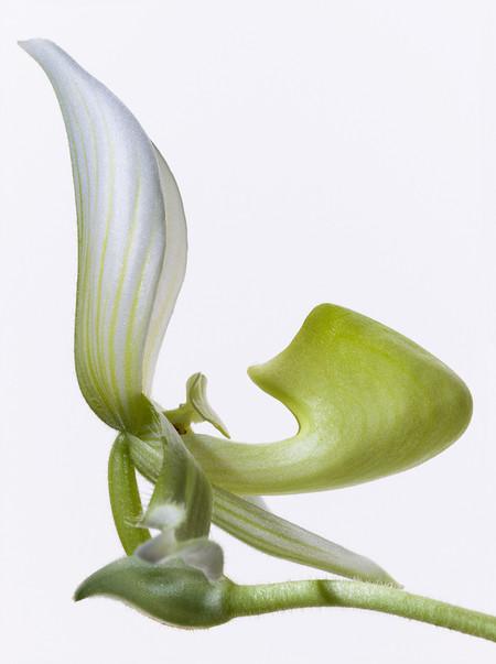 Big Blooms – когда позируют цветы — фото 7