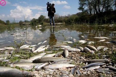 Это Греция, рыба гибнет от химической грязи
