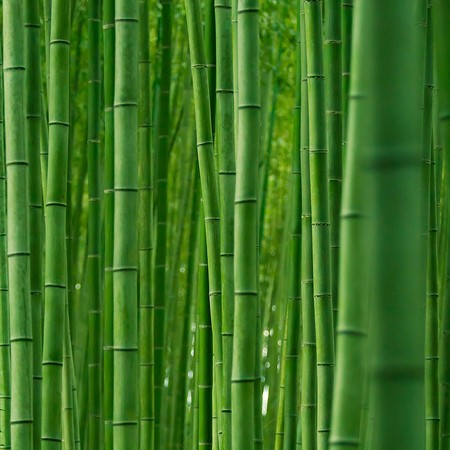 Япония, Киото, бамбуковая роща, красиво … — фото 10