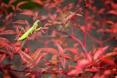 Осень умеет уходить красиво. 55 причин полюбить осень — фото 48