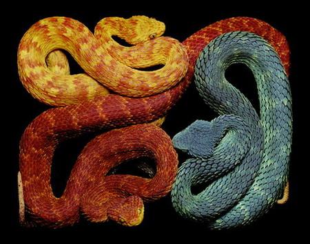 Гвидо Мокафико (Guido Mocafico) - Повелитель змей — фото 13