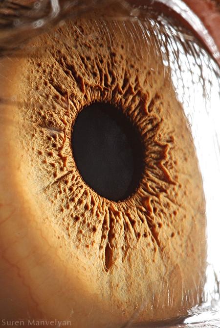 Глаза людей и животных – макроснимки Сурена Манвеляна — фото 16