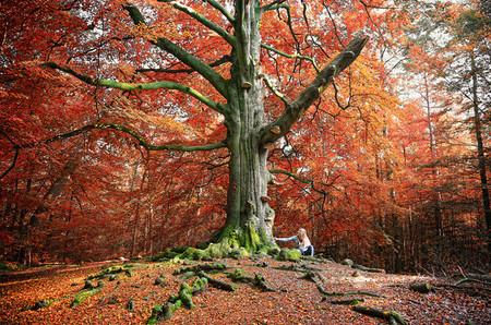 Осень – многоцветная царица… Волшебные фотопейзажи Ларса Ван де Гур — фото 17