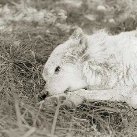 Фотографии пожилых животных от Исы Лешко — фото 2