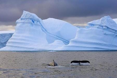 Кит плещется в ледяном лабиринте