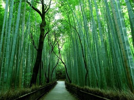 Япония, Киото, бамбуковая роща, красиво … — фото 12