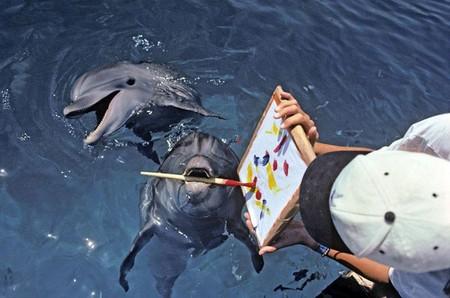 Рисующие дельфины — уже не редкость