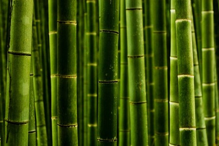 Япония, Киото, бамбуковая роща, красиво … — фото 15