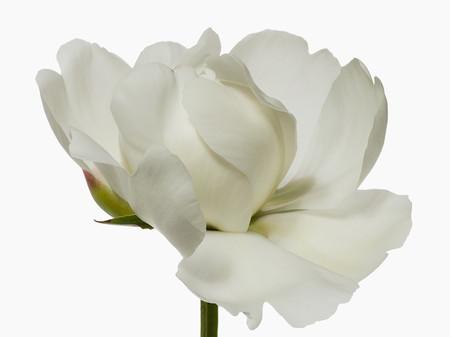 Big Blooms – когда позируют цветы — фото 2