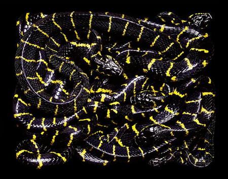 Гвидо Мокафико (Guido Mocafico) - Повелитель змей — фото 18