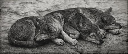 Картины в технике скрэтчборд от Кристины Пенеску — фото 12