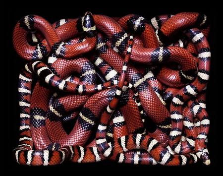 Гвидо Мокафико (Guido Mocafico) - Повелитель змей — фото 19