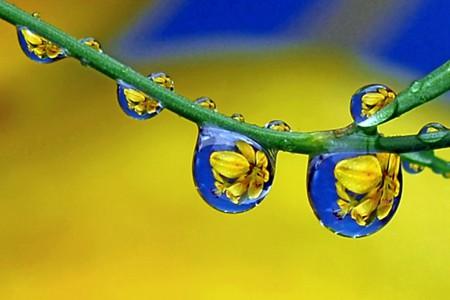 Целый мир внутри капли – фотографии Стива Уолла — фото 32