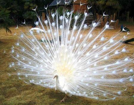 Такого красавца вполне можно считать царем птиц!