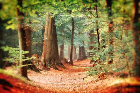 Осень – многоцветная царица… Волшебные фотопейзажи Ларса Ван де Гур — фото 4