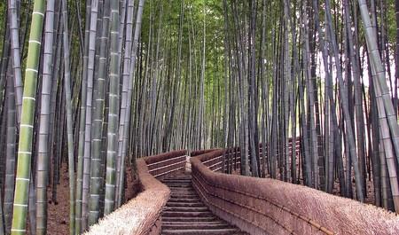 Кроме коридора, существует еще бамбуковая лестница