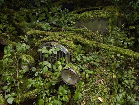Парковка в раю – работы Питера Липпмана — фото 11