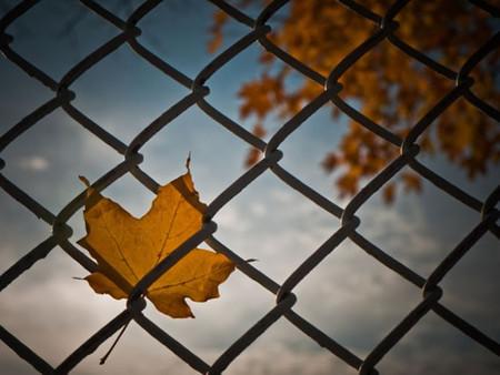 Осень умеет уходить красиво. 55 причин полюбить осень — фото 35
