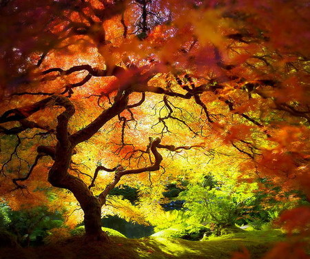 Осень умеет уходить красиво. 55 причин полюбить осень — фото 24