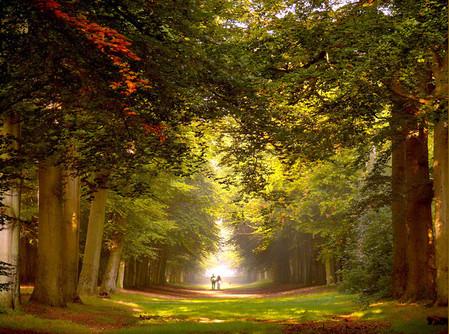 Осень – многоцветная царица… Волшебные фотопейзажи Ларса Ван де Гур — фото 15