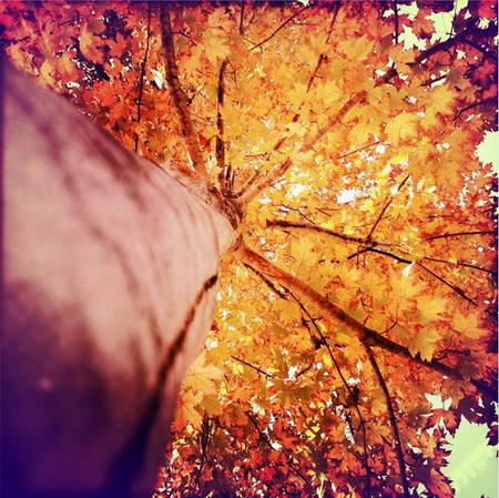 Осень умеет уходить красиво. 55 причин полюбить осень — фото 30