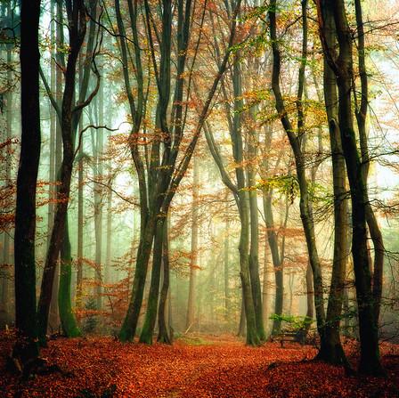Осень – многоцветная царица… Волшебные фотопейзажи Ларса Ван де Гур — фото 6