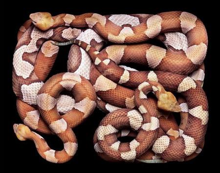 Гвидо Мокафико (Guido Mocafico) - Повелитель змей — фото 4
