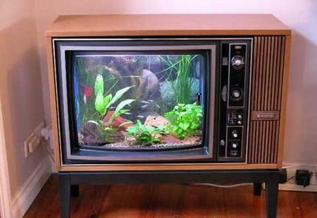 Аквариум – не только домик для рыб. Необычные и разные, маленькие и огромные аквариумы – солисты в интерьере — фото 4