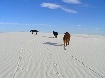Белая жара в пустыне White Sands National Monument — фото 10