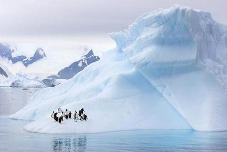Аквапарк для пингвинов )))