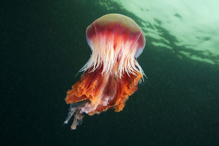 Подводные фотоэксперименты Александра Семенова — фото 8