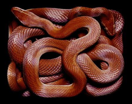 Гвидо Мокафико (Guido Mocafico) - Повелитель змей — фото 16
