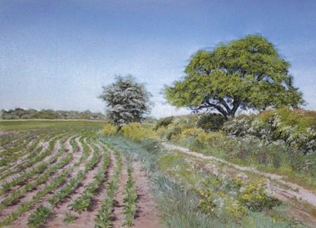 Тут полное сходство с украинским полем картошки )