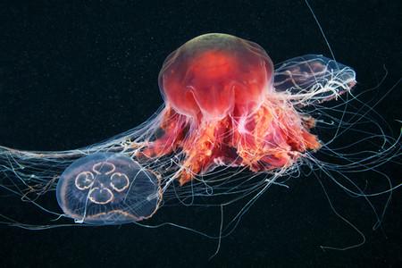 Подводные фотоэксперименты Александра Семенова — фото 28