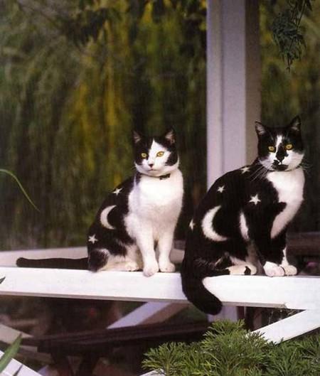 Что такое котопейнт, или «Раскрась кота!» — фото 18