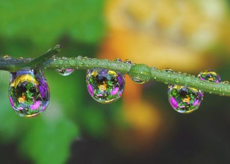 Целый мир внутри капли – фотографии Стива Уолла — фото 26