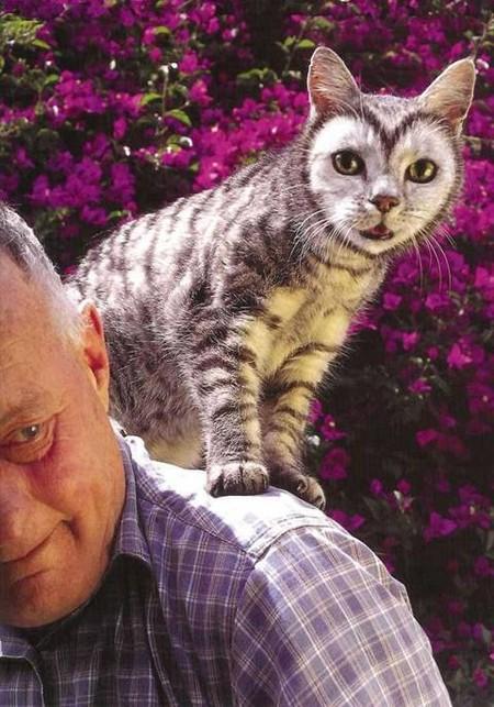 Что такое котопейнт, или «Раскрась кота!» — фото 21