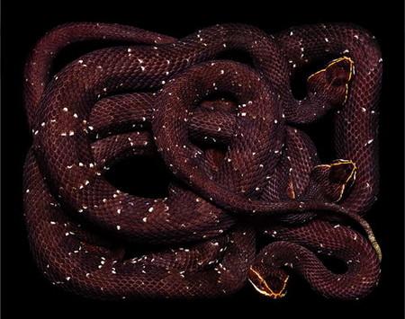 Гвидо Мокафико (Guido Mocafico) - Повелитель змей — фото 10