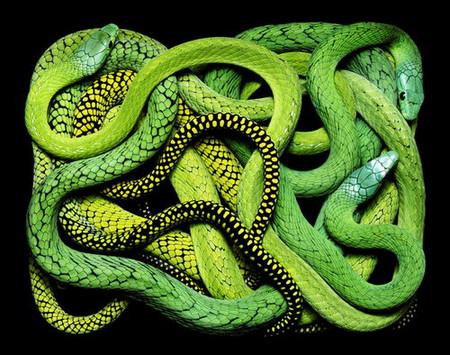 Гвидо Мокафико (Guido Mocafico) - Повелитель змей — фото 14