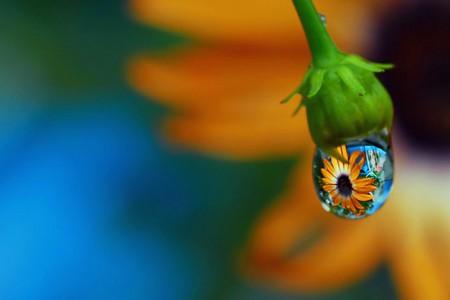 Целый мир внутри капли – фотографии Стива Уолла — фото 42