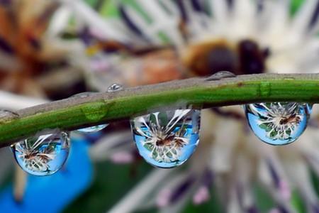 Целый мир внутри капли – фотографии Стива Уолла — фото 29
