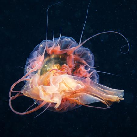 Подводные фотоэксперименты Александра Семенова — фото 3