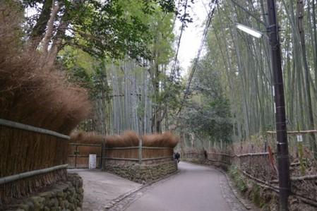 Япония, Киото, бамбуковая роща, красиво … — фото 7