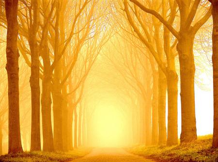 Осень – многоцветная царица… Волшебные фотопейзажи Ларса Ван де Гур — фото 22